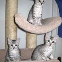 kassidi_3_kittens