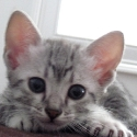 kassidi_kitten_closeup