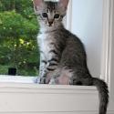 kassidi_kitten_window